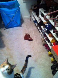 The Earthquake Damage.