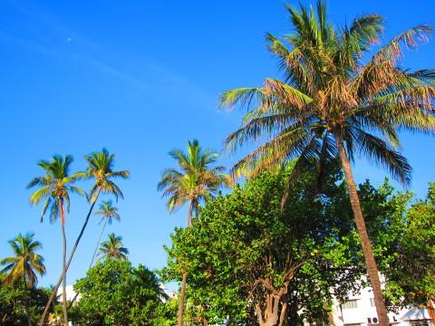 Miami Sunny Day