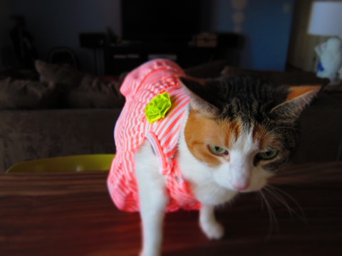 Indiana Mousekowitz in a Dress